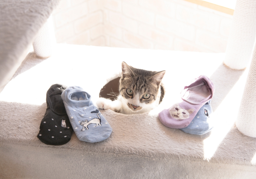 猫好きにはたまらない世界観